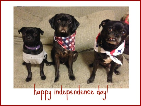 Happy Independence Day from the Pugs