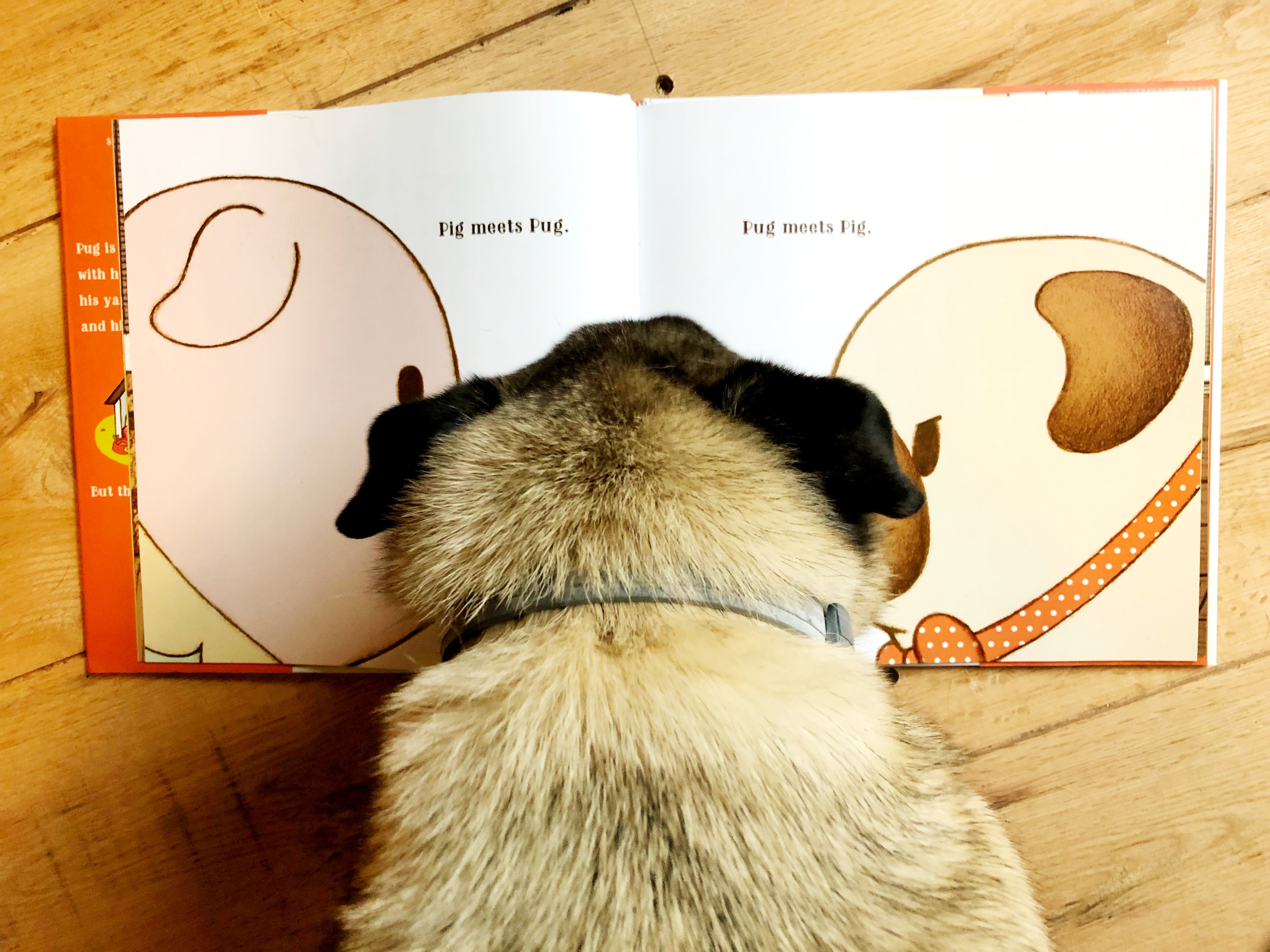 Gallion, Sue Lowell - Pug Meets Pig (3)